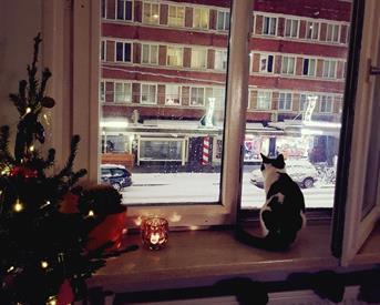Kamer in Amsterdam, Jan Evertsenstraat op Kamernet.nl: Luxe studio met bedstee/loft bed