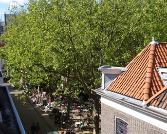 Kamer in Delft, Molslaan op Kamernet.nl: Zelfstandig apartement binnenstad Delft